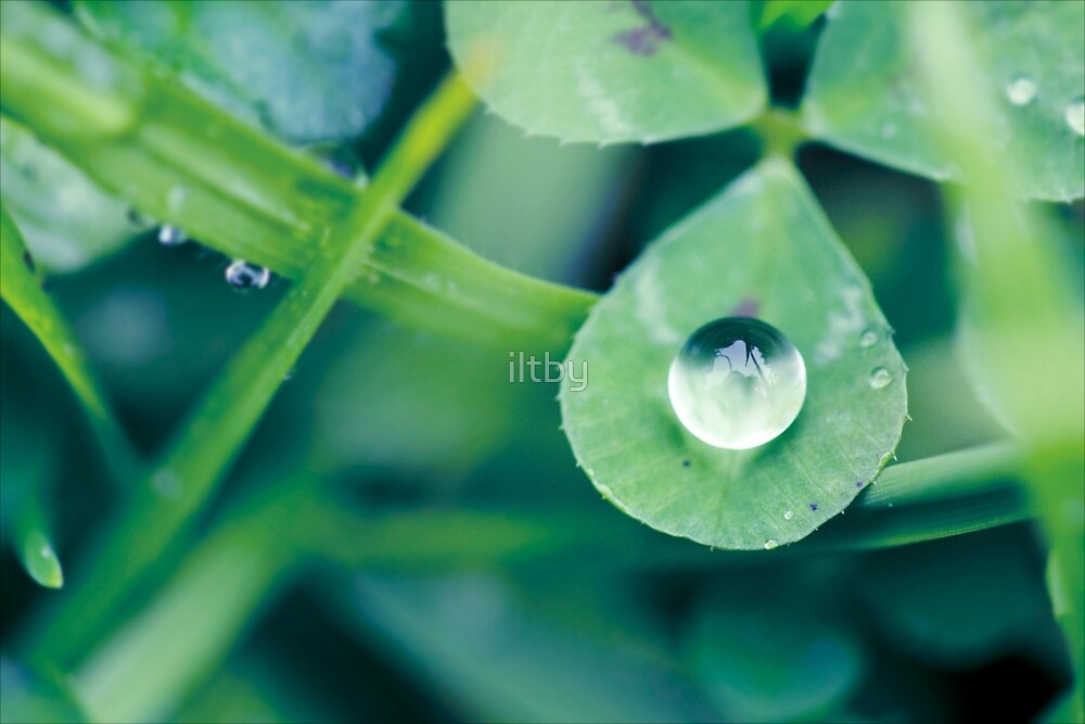 A Little Bit of Luck by Josie Eldred