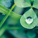 A Little Bit of Luck by iltby
