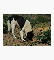 Stray Dog in a Field Photographic Print