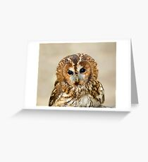 Tawny Owl head shot Greeting Card
