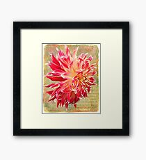 Frilly and Fabulous Framed Print