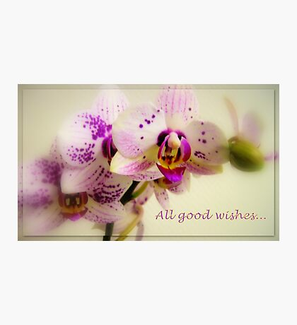 All good wishes... Photographic Print