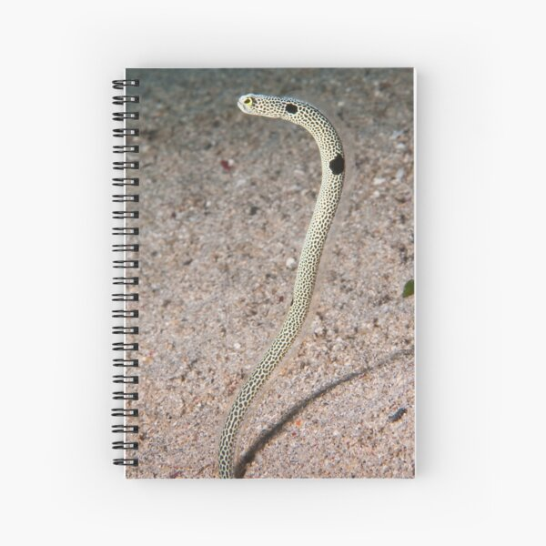Spotted Garden Eel, North Sulawesi, Indonesia Spiral Notebook