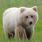 """Orphan Bear Cub! by Anthony Goldman"