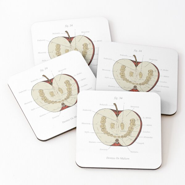 The Magnus Archives - Anatomy Class - Teeth Apple Coasters (Set of 4)