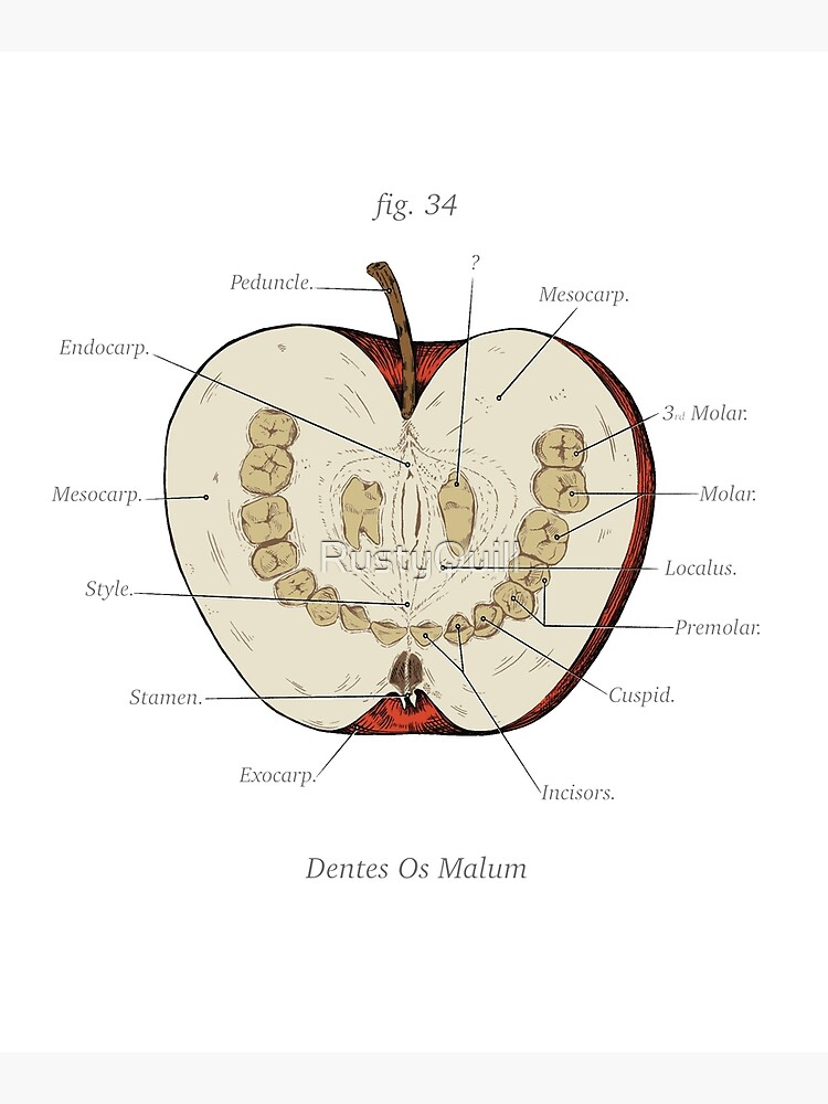 The Magnus Archives - Anatomy Class - Teeth Apple by RustyQuill