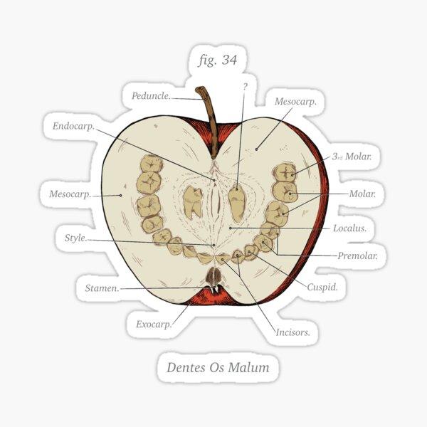 The Magnus Archives - Anatomy Class - Teeth Apple Sticker