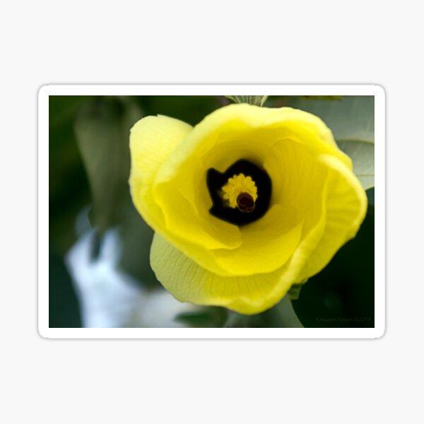 """I'm listening!"" ~ Hibiscus Tiliaceus Yellow Bloom  Sticker"
