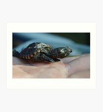Baby Snapping Turtle #2 Art Print