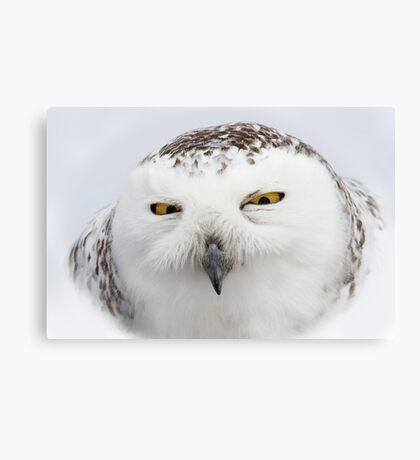"""""""Whooo goes there?"""" - Snowy Owl Canvas Print"""