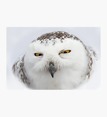"""Whooo goes there?"" - Snowy Owl Photographic Print"
