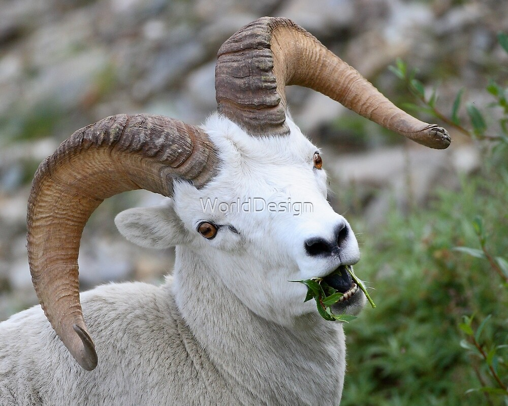 Ram Portrait by WorldDesign