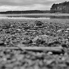 Forgotten Shores by Scott Mitchell