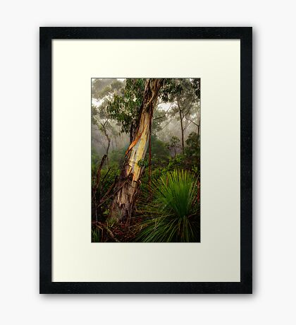 For The Love Of Trees - The HDR Experience Framed Print
