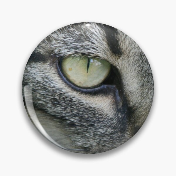 The cat's eyes. Not sweet! Character cat photo. Pin