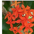 Hedge Flower by June Holbrook