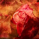 Romancing the rose by Celeste Mookherjee
