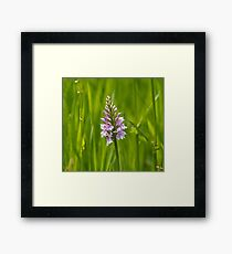 Common Spotted Orchid Framed Print