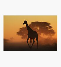 Giraffe - African Wildlife Background - Triangles in Nature Photographic Print