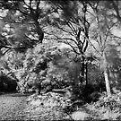 Poetic Trees by alienfunk