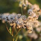 Wild Weeds by teresa731