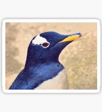Gentoo penguin Sticker