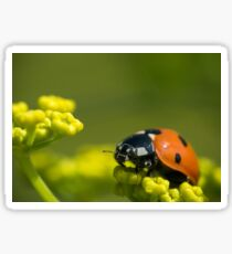 Ladybird close up on a plant Sticker