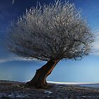 Winter Magic by robevans