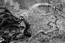 gefällter Baum von Marianna Tankelevich