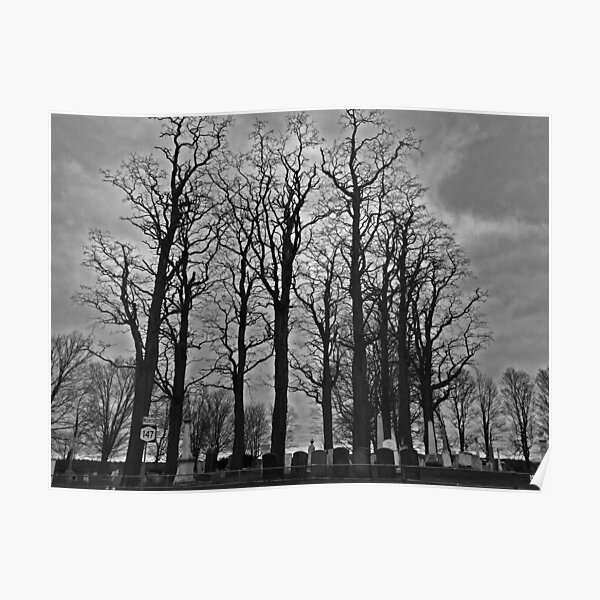 Cemetery Trees Poster