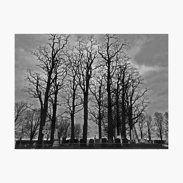 Cemetery Trees Photographic Print