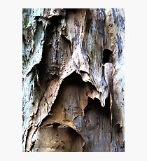 Beautiful Bark Abstract. #b Photographic Print