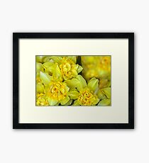 Yellow narcissus macro Framed Print