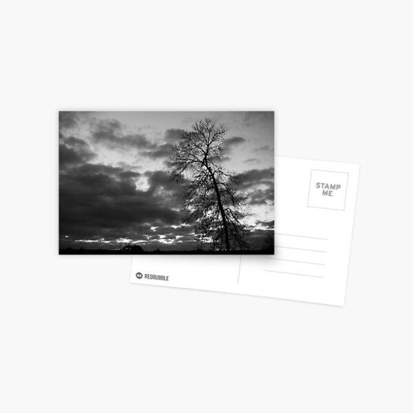 Crooked Tree Postcard