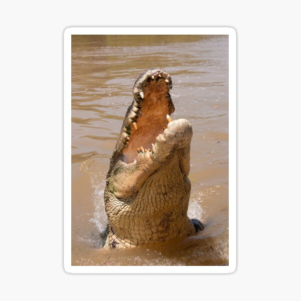 Saltwater Crocodile on the Adelaide River Sticker