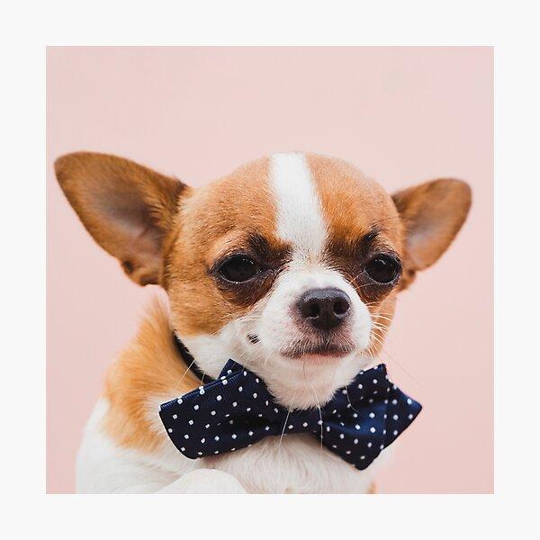Chihuahua Puppy Wall Art Redbubble