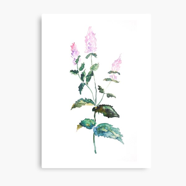 Wild herbs collection watercolor Metal Print