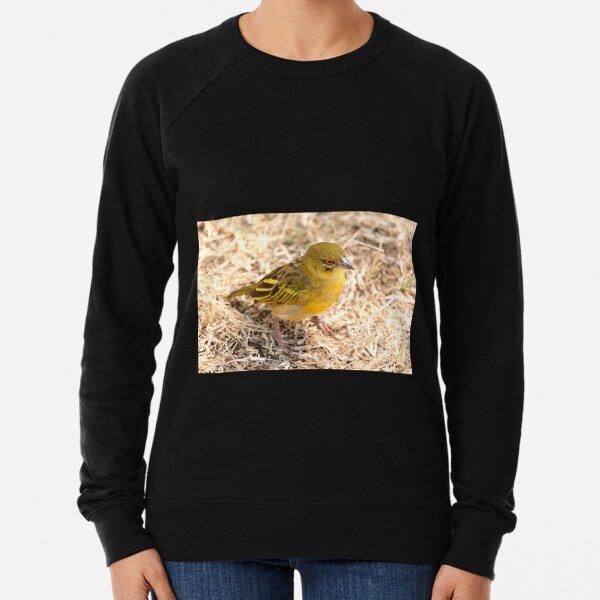 Yellow-fronted Canary, Serengeti National Park, Tanzania  Lightweight Sweatshirt