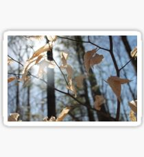 Sunlit Leaves - Strawberry Field Sticker