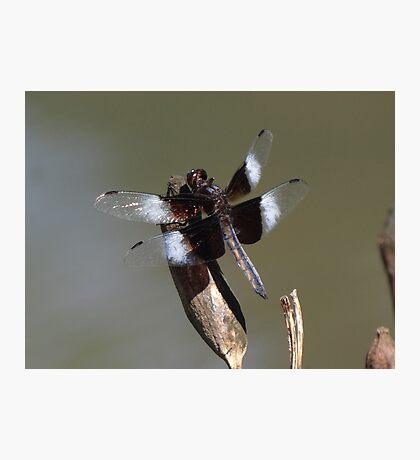 Winged Creature Photographic Print