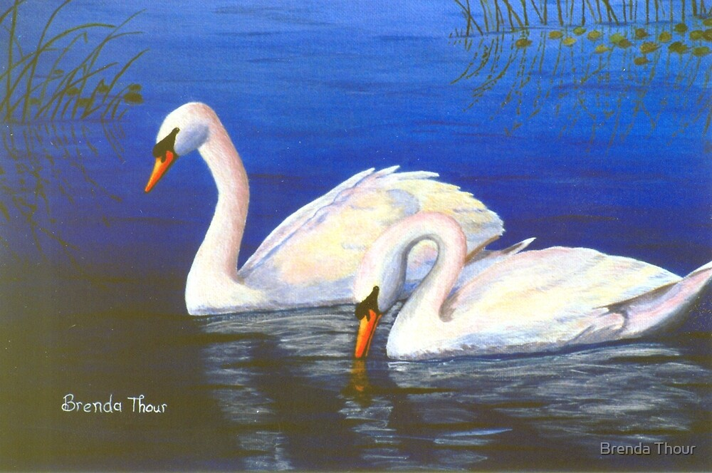 Swan Reflections by Brenda Thour