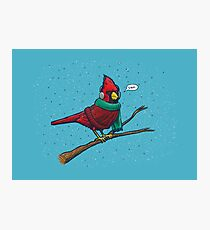 Annoyed IL Birds: The Cardinal Photographic Print