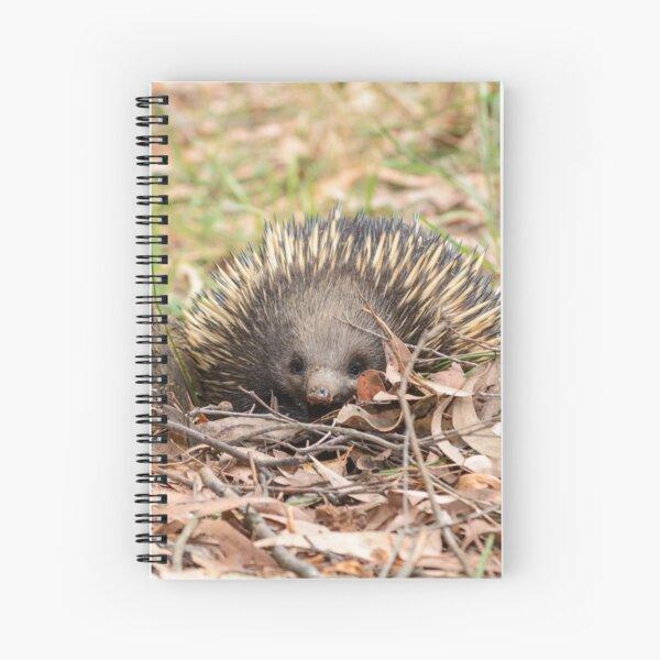 """Echidna Face"" - Australian Animals Australian Wildlife Spiral Notebook"