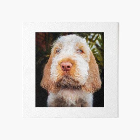 Irresistible Spinone Puppy Art Board Print