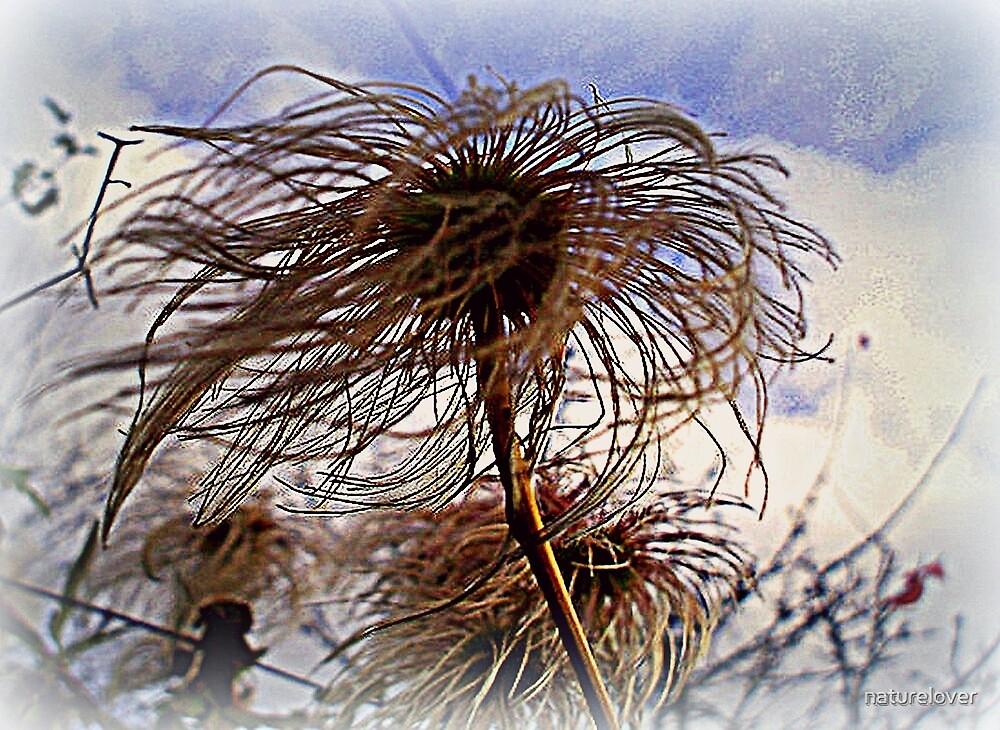 Windblown   by naturelover