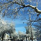 Northeast snow storm (USA) by Nancy Richard