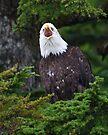 Eagle Screaming by WorldDesign