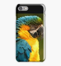 Macaw with Ruffled Feathers iPhone Case/Skin