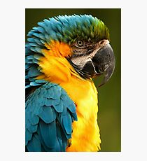 Macaw with Ruffled Feathers Photographic Print