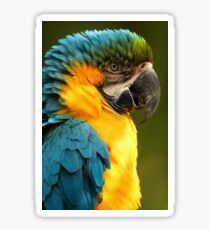 Macaw with Ruffled Feathers Sticker